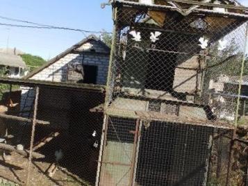 В Бугуруслане мужчина взломал сарай и украл 35 голубей